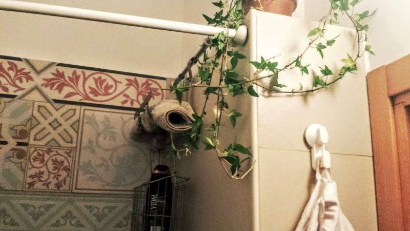 Piante are biutiful vado a vivere da solo - Mi bagno troppo ...