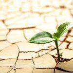 Tornare single con resilienza