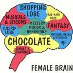 cervello-femminile