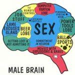 cervello-maschile