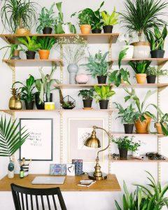 libreria con piante