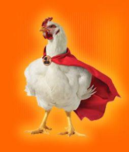 uomini come polli da allevamento